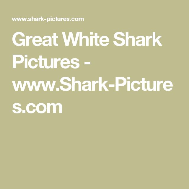 Great White Shark Pictures - www.Shark-Pictures.com