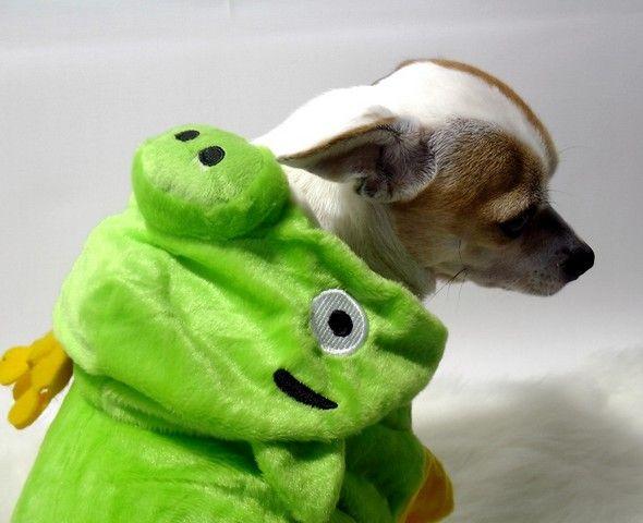 http://www.rebeldog.cz/cz/zbozi/950_0/angry-pets/RD-AGBGRE18-XXS_-nove-oblecek-pro-psy-angry-birds-zeleny-xxs-1-18cm-limitovana-kolekce