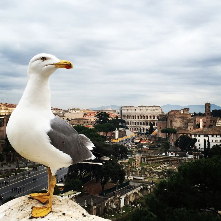 Just some bird I met in Rome ft. The Forum and Colosseum in the back ground
