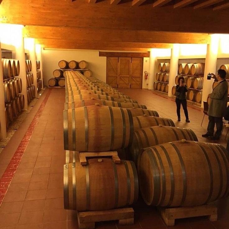 Irish buyers in a winery - educational tour in Italy