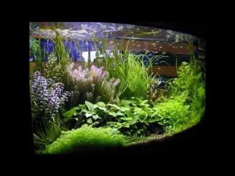 Desain Aquarium Air Tawar