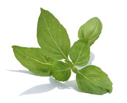 Basilicum  heeft een zoete geur met een hint van kruidnagel en een warme, subtiel peperige smaak met een vleugje munt. Niet alleen geschikt in hartige (Italiaanse) gerechten, maar ook in zoete, bijvoorbeeld gecombineerd met frambozen. Voor smaakbehoud basilicum het liefst op het laatst toevoegen aan een (warm) gerecht
