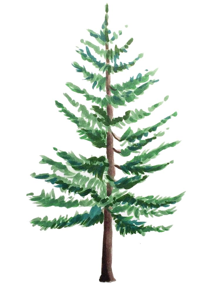 Drawing Pine Trees With Copic Markers Pine Tree Painting