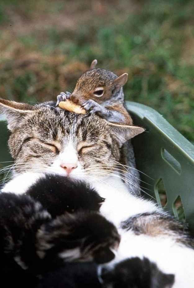 This mama cat and all of her babies, adopted a baby squirrel.