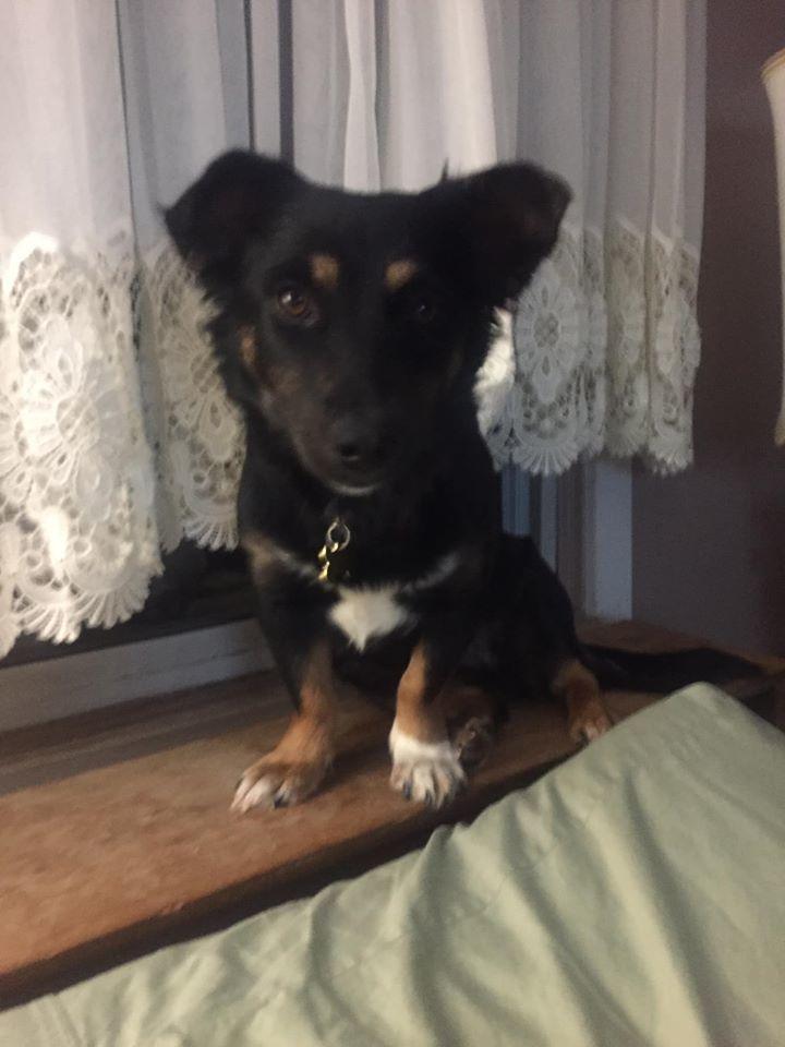 Adopt Sarafina On Petfinder Dog Adoption Help Homeless Pets