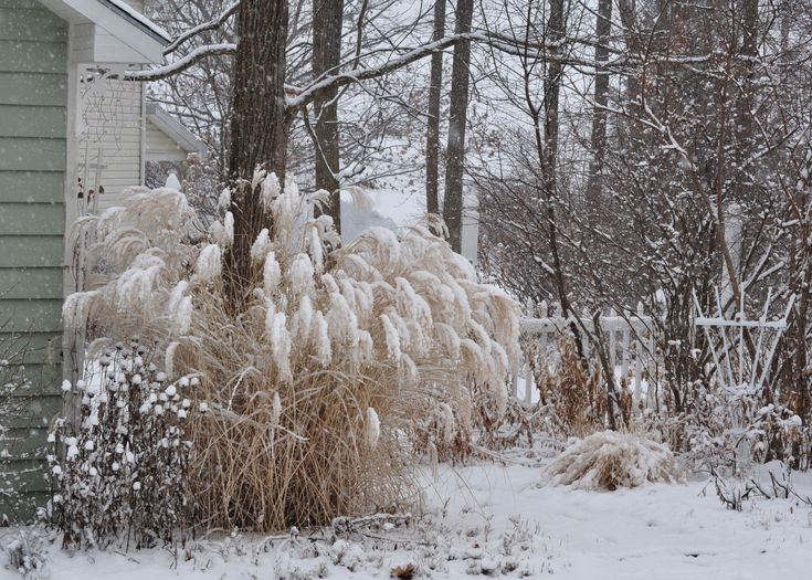43 Best Images About Garden In Winter On Pinterest