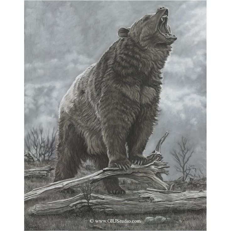 Bear Print | Last Stand | Gary Johnson