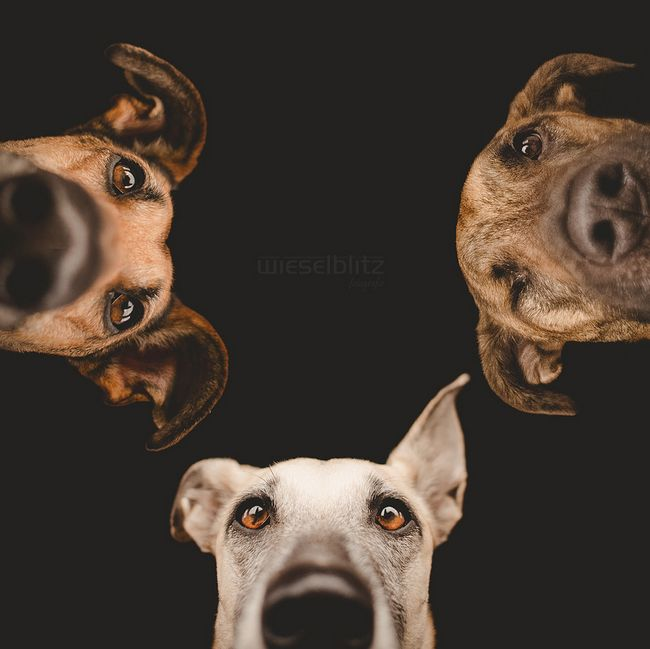 Pet Photography Tips by Elke Vogelsang