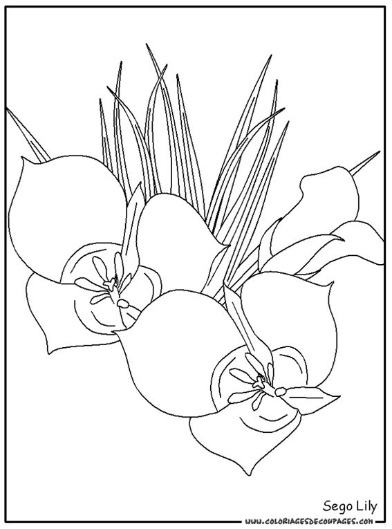 31 best fence walls images on pinterest mickey mouse parties coloring pages and mickey birthday - Coloriage fleur tps ...