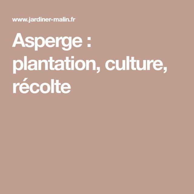 Asperge : plantation, culture, récolte