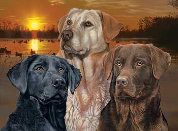 Sunset Trio-Dogs Art Print by Scot Storm  |  Wild Wings