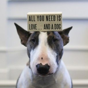 neville jacobs - all you need is love and a dog