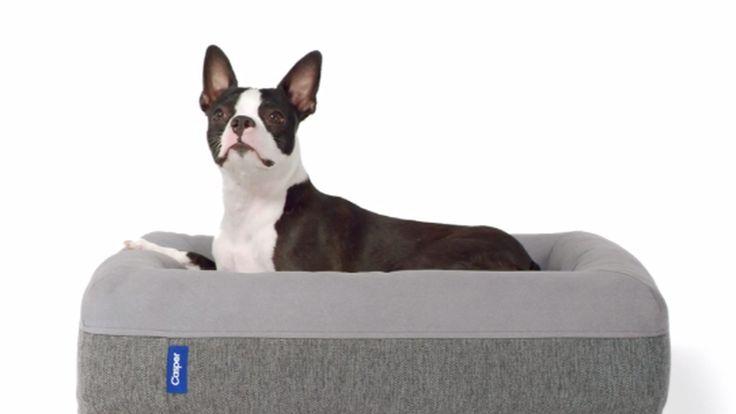 Casper's dog bed