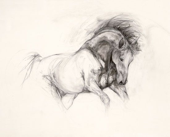 #horse #drawing