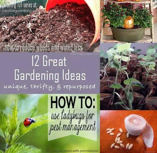 12 great gardening ideas