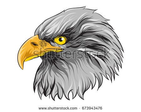 Eagles Head Illustration Vector Detail Isolated