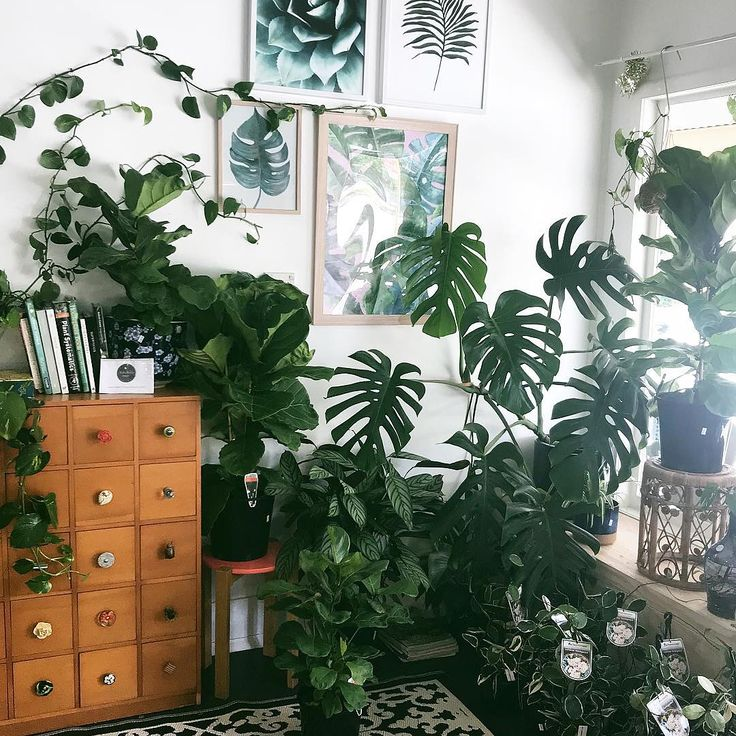 """13.5k Likes, 142 Comments - House Plant Club (@houseplantclub) on Instagram: """"Where you headed with that Monstera, Tylor? Bring it over here! : @urlocalplantboy thanks for…"""""""