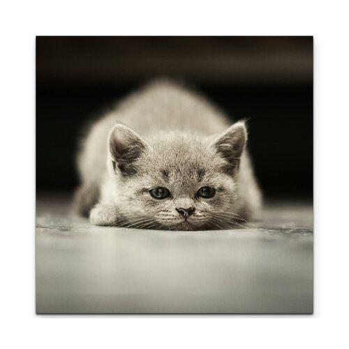 East Urban Home British Shorthair Kitten Against A Black