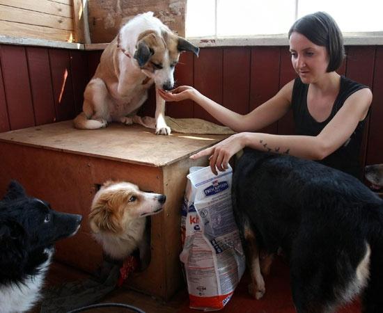 Oltre 340 tra cani e gatti abbandonati sono passati per il cortile di casa di Nastya. Lei, che vive in un paese rurale della Bielorussia, ha deciso di trasformare il piccolo appezzamento di terreno di sua proprietà in un rifugio per animali, dove ospita e cura gli esemplari che ne hanno bisogno. Aiutata da una folta schiera di volontari, Nastya si occupa di loro, con poche risorse e tanto amore, in attesa che trovino una famiglia.