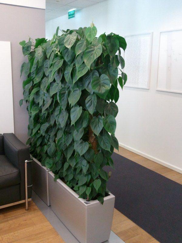 20 besten Rośliny w biurze Bilder auf Pinterest | Balkon, Büros und ...