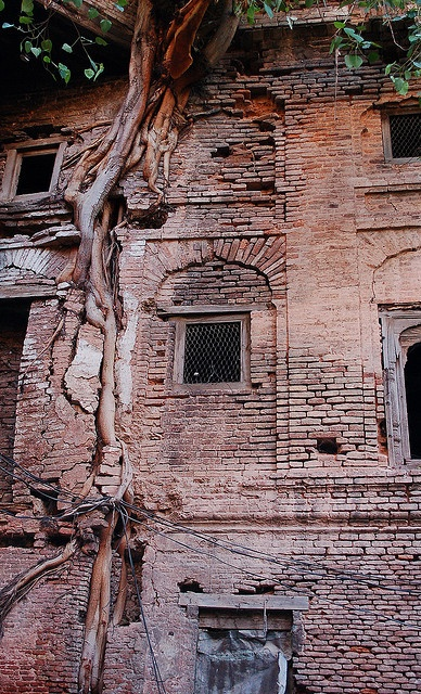 The Power of Trees. Old City Rawalpindi, Pakistan