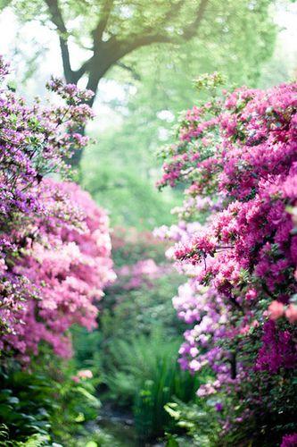 .花のない庭に 誰が足を止めますか