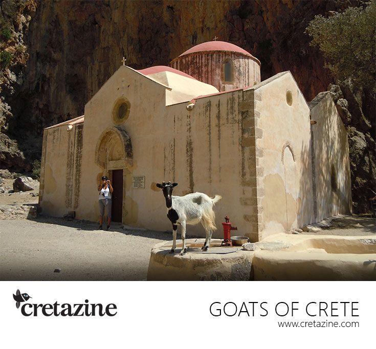 In the name of the Holy Goat!  http://cretazine.com/en/crete/travel-explore/island-routes/item/53-agiofaraggo-eng