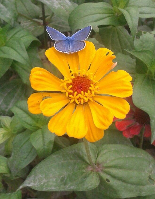 Vivere non è abbastanza, disse la farfalla, uno deve avere il Sole, la libertà e un piccolo fiore
