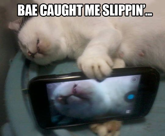 I usually don't like these damn cat memes... But fml this is funny