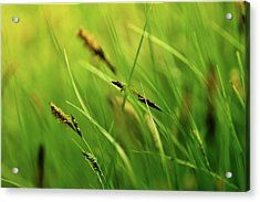 Sea of grasses by Yarinka Morozova  The stalks of the grass crumble under the wind  #Yarinka MorozovaFeineArtPhotography#ArtForHome#Grass # spikelets # summer # green