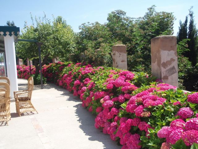 Pinterest the world s catalog of ideas for Jardines con hortensias