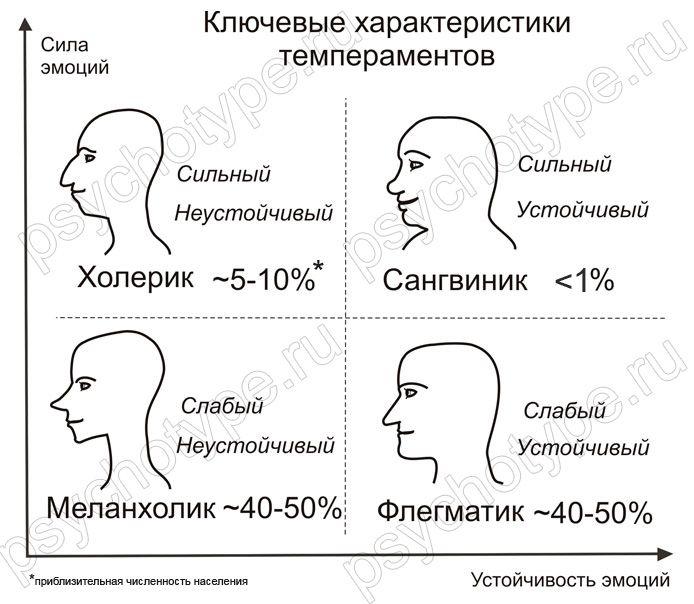 Темпераменты. Типы, внешность, профориентация, определение | Школа Физиогномической Соционики