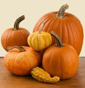 All About Pumpkins - Pumpkin Facts and Information  A thorough rundown of the various traits of commonly available pumpkin varieties