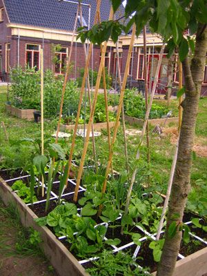 25 beste idee n over tuinieren in potten op pinterest tuinieren het planten van bloemen en - Groenten in potten op balkons ...