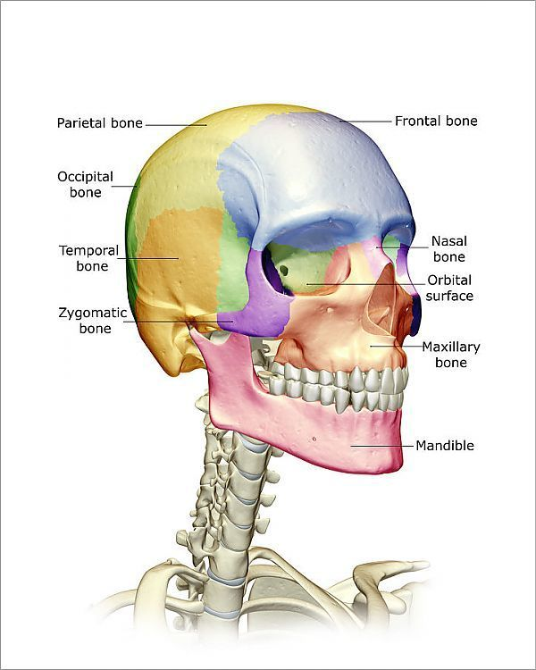 14++ Anatomical term for chin trends