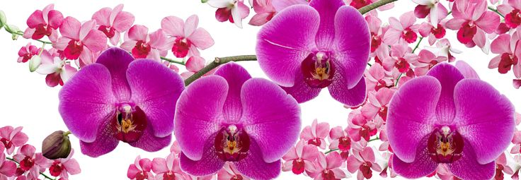 The Orchid Show | NYBG Bronx new york