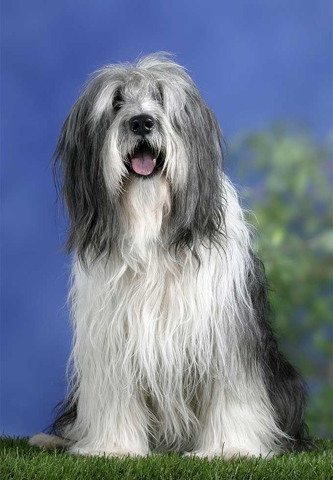 162 best PON Poolse Herder images on Pinterest | Doggies, Polish ...