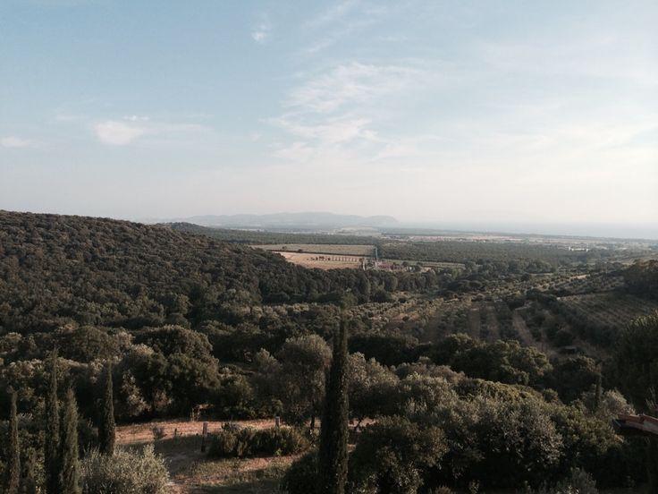 Agriturismo POGGIO AI SANTI nel Livorno, Toscana