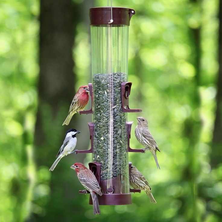 New Wild Bird Feeder Hanging Seed Outdoor Station Free Shipping Washable Plastic #MoreBirds
