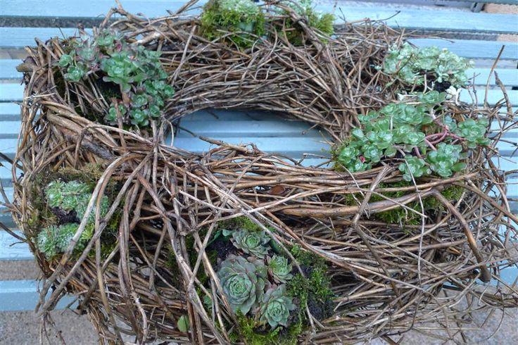 Scheuern Sie den Kranz, der mit Hauswurzel gepflanzt wird   – beton