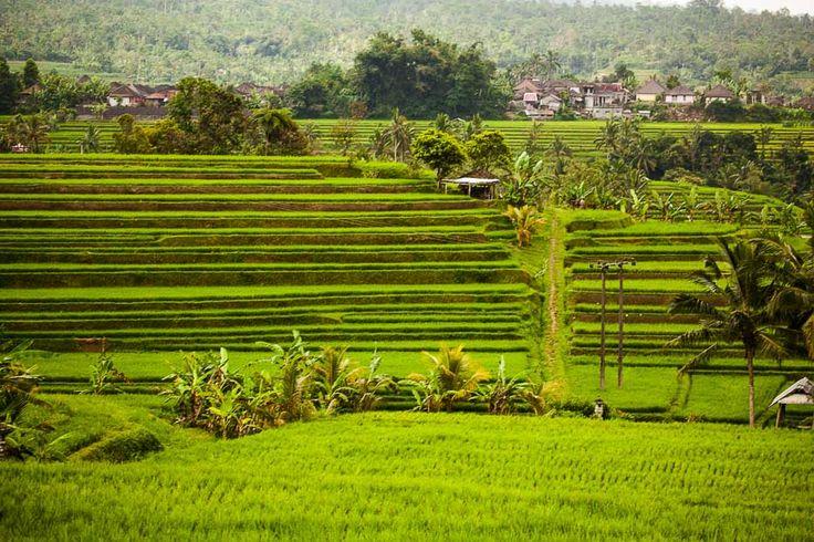 Jatiluwih Bali Cagar Budaya Dunia: Jendela Kesejahteraan Masyarakat