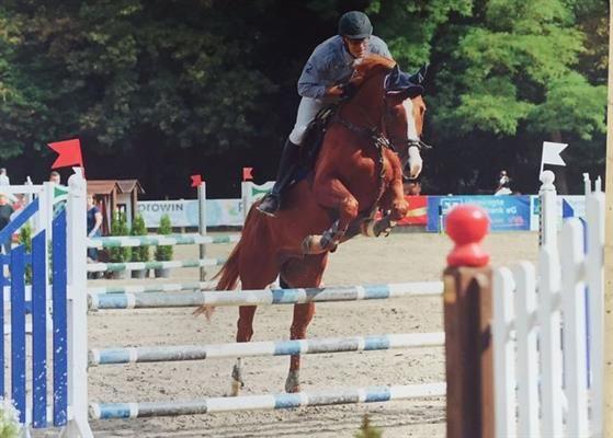 Pferde zu verkaufen: 7 jähriger Holsteiner Wallach von Quirado