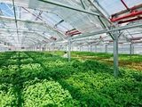 Massive Rooftop Greenhouse Coming to Jamaica - DNAinfo.com New York