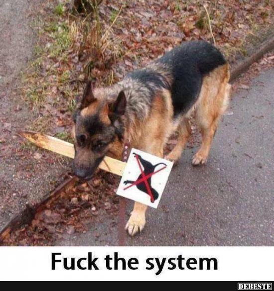 System eines Down Fuck