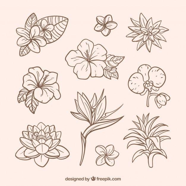 Www Freepik Com Diy Flowers Tropical Flower Tattoos Flower Drawing Flower Sketches