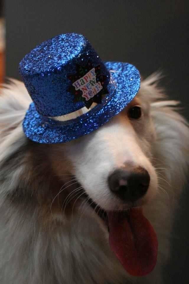 Almost Home Dog Rescue Of Ohio Facebook