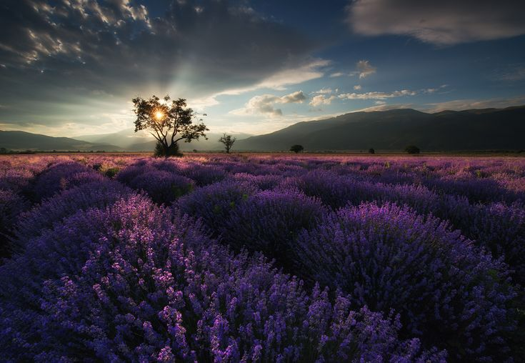 https://flic.kr/p/TCyTyN | Lavender in Bulgaria | One of the amazing places, we will visit during our workshop this summer.Visit our: Photography workshops in Bulgaria ____________________________________________ My Facebook - My Website - My 500px
