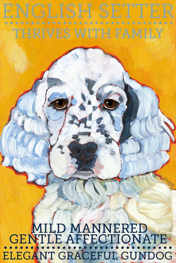 English Setter: mild mannered, gentle, affectionate.