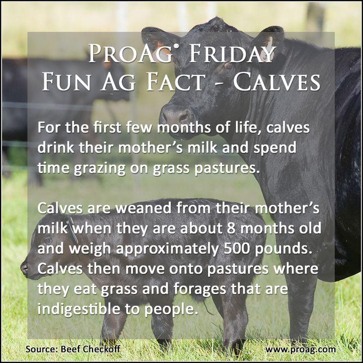 Farm Fun Facts - a-k-b info