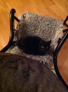 Katt på grått lammskinn i gungstol.